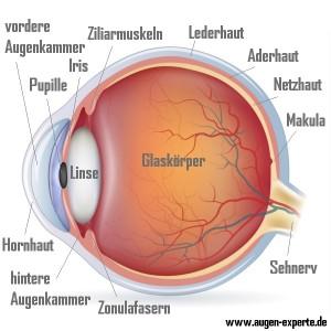 Auge Aufbau Anatomie beschriftet