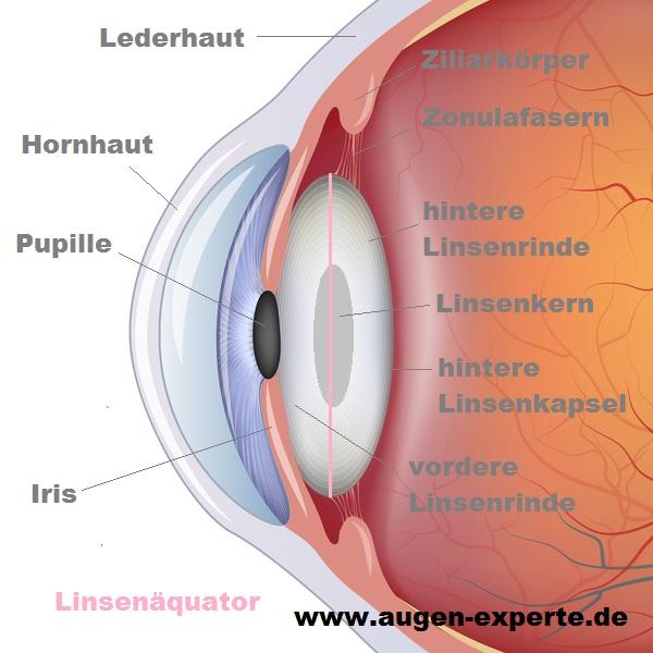 Linse des menschlichen Auges - Aufbau und Funktion erklärt